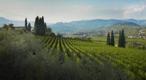 Vigneti Wine Tours Val Policella Crippa NCC Transfer Service